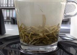 Зеленый чай защищает клетки головного мозга
