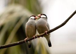 Что такое орнитологическое ралли?