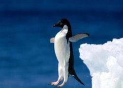 На юге Бразилии гибнут пингвины