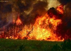 В Боржоми снова горят леса