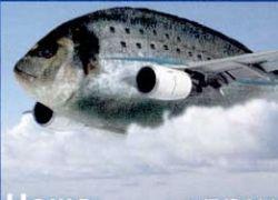 Полет самой удивительной рыбы