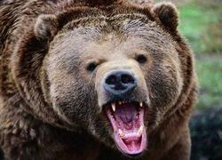 Гордон Браун: Что мы противопоставим неприкрытой агрессии России?