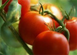 30 легких шагов к долголетию: секс, кровь и помидоры