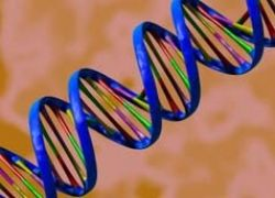 Какова связь между фамилией мужчины и его ДНК?
