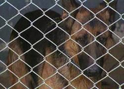 В Москве предлагают построить собачьи тюрьмы