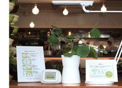 Растения ведут блоги