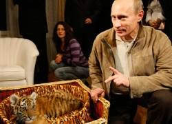 Неизвестный подарил Путину на день рождения тигрицу