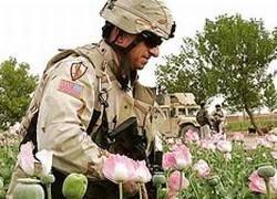 НАТО будет уничтожать опиумные цеха в Афганистане