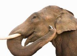 Как с помощью мобильного телефона в Кении защищают урожай и слонов