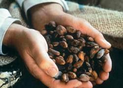 Любой продукт из какао полезен для здоровья