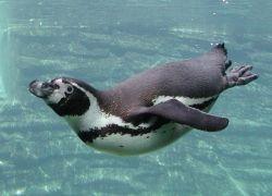 Бразилия отправляет пингвинов обратно домой в Антарктиду