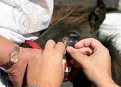 Создан искусственный глаз для лошади