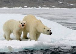 Лёд в Арктике никогда не растает