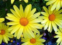Какие цветы, кому и когда подарить?