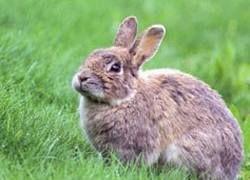 Знаменитый музей закрыли из-за нашествия кроликов