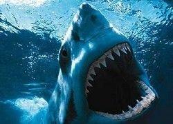 Кровь акулы поможет в борьбе с раком