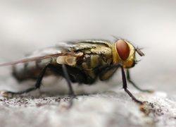 Ученые обнаружили самый древний из известных след насекомого