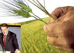 Рекордный урожай - беда для российского сельского хозяйства