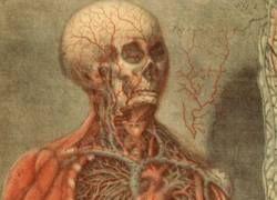 10 бесполезных органов