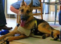 Собака спасла своего хозяина, набрав 911