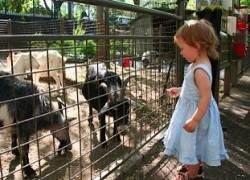 Новые развлечения в зоопарках Нью-Йорка