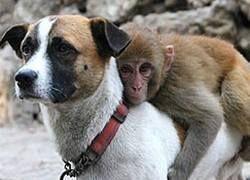 К мартышке в китайском зоопарке приставили телохранителя