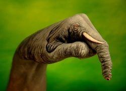 Когда повсюду кажутся слоны