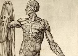 10 бесполезных органов. Часть II