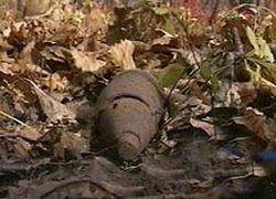 В подмосковном лесу обнаружили тайный склад боеприпасов времен войны