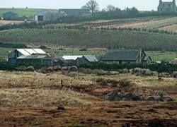 Фермеры обвинили во вспышке ящура исследовательские лаборатории