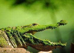 7 интересных фактов о крокодилах
