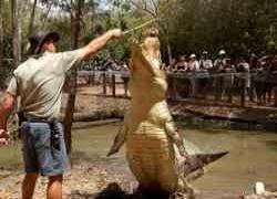 14 интересных фактов о крокодилах