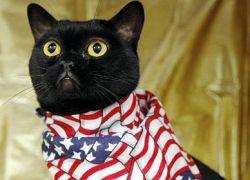 Обама и Маккейн борются за звание лучшей кошки