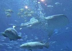 В самом роскошном отеле Дубаи появился аквариум с акулой