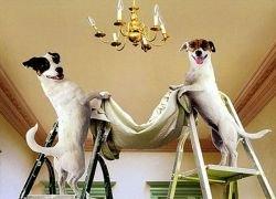 Если бы собаки жили по-человечески?