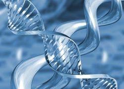 Предки человека заимствовали полезные гены у вирусов