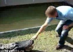 Крокодил откусил пальцы назойливому посетителю