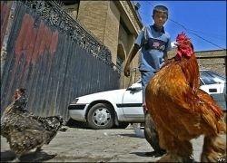 Большинство стран мира разработали план по борьбе с птичьим гриппом