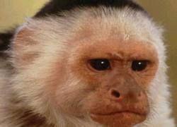 Примат обесточил целый город, поплатившись за это жизнью