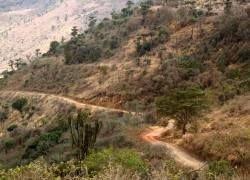 В Танзании обнаружили 17 новых видов рептилий и амфибий