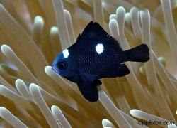 В гостях у жителей кораллового рифа