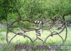 Pooktre — искусство управлять формой деревьев