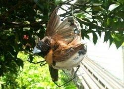 Пауку удалось заманить в сети птицу