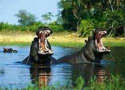 Самые-самые существа планеты