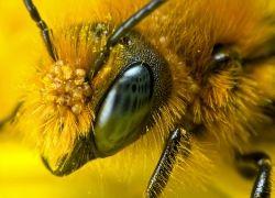 Пчелы умеют считать до четырех
