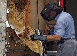 Пчелы закусали до смерти трех собак и ранили старушку