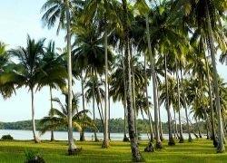 Глобальное потепление и кислотные дожди улучшают рост лесов