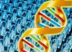 Ученые нашли гены, виновные в развитии шизофрении