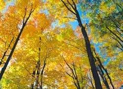 Теплая осень продлится до декабря