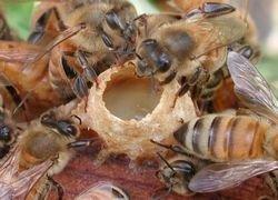 Ученые бьют тревогу: пчелы массово вымирают по всему миру